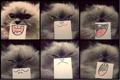 Cat Emoticons | Little Things That Amuse Me